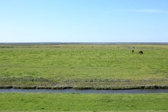 Idyllic coast in the Province Friesland, The Netherlands Royalty Free Stock Photography
