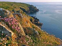 Idyllic coastline of mullion cove, with wildflowers, south west Stock Photo