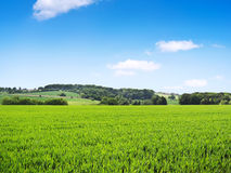 Idyllic country scene with crop field Royalty Free Stock Photography