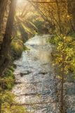 Idyllic creek at sunrise royalty free stock photos