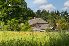 Idyllic Dutch farm. With a colourfull cornfield in front with several wild flowers in the sun Stock Photo