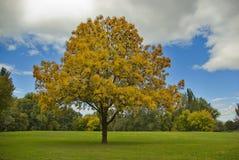 Idyllic fall landscape Stock Photography