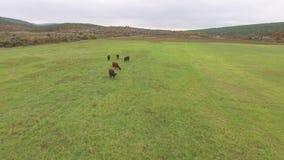 Idyllic farm pastures stock footage