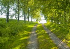 Idyllic field path. At spring time in Southern Germany Royalty Free Stock Image