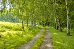 Idyllic field path. At spring time in Southern Germany Stock Photo