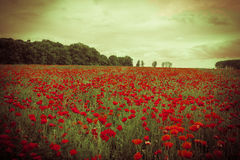 Idyllic field with red poppies against the sunset sky Royalty Free Stock Photography