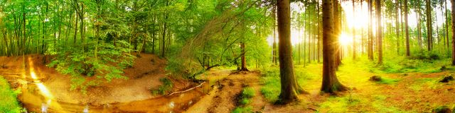 Idyllic forest with brook royalty free stock photos