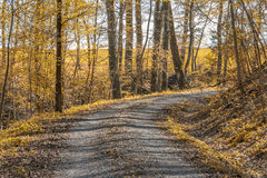 Idyllic forest and field path. Sunny illuminated idyllic indian summer forest scenery wit field path Stock Image