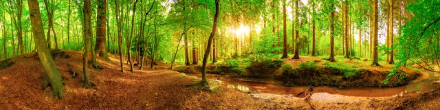 Idyllic forest in Germany. Panorama of an idyllic forest with brook at sunrise Royalty Free Stock Photos
