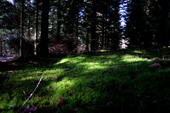 Idyllic forest in March Royalty Free Stock Images