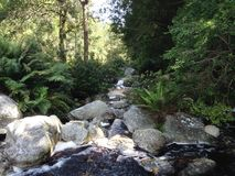 Idyllic forest mountain stream. Mountain stream in the Knysna forest, South Africa. Tannin stained water cascade over pebbles and boulders, nourishing a lush royalty free stock photo