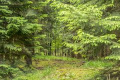 Idyllic forest scenery. At late summer time Royalty Free Stock Photography