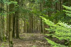 Idyllic forest scenery. At late summer time Royalty Free Stock Images