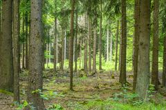 Idyllic forest scenery. At late summer time Royalty Free Stock Photos