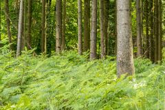 Idyllic forest scenery. Overgrown idyllic forest scenery at late summer time Royalty Free Stock Photos