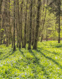 Idyllic forest scenery Stock Photo