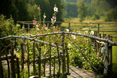 Idyllic garden with mallows Royalty Free Stock Photography