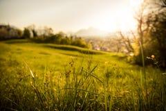 Idyllic golden landscape evening scenery: Summer meadow, sundown. Grass and flowers in the foreground, beautiful golden meadow evening scenery in the blurry stock photos