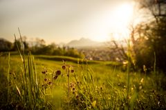 Idyllic golden landscape evening scenery: Summer meadow, sundown. Grass and flowers in the foreground, beautiful golden meadow evening scenery in the blurry stock image