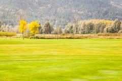 Idyllic golf field Stock Images