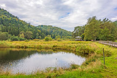 Idyllic green forest landscape. With pond in the foreground Stock Photo