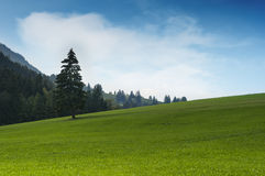 Idyllic green grass hill with single tree Stock Photos