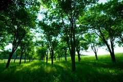 Idyllic green spring park Royalty Free Stock Photo