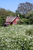 Idyllic holiday home in flower meadow on Bornholm Royalty Free Stock Image