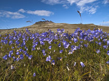 Idyllic Iceland. A scenic view over an icelandic landscape with wildflowers in the foreground Stock Photo