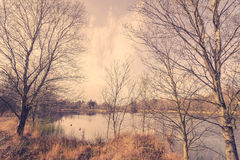 Idyllic lake with ducks Royalty Free Stock Photography