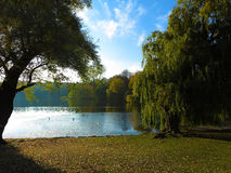 Idyllic lake in a park Royalty Free Stock Image