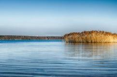 Idyllic Lake with reeds. And blue sky Stock Image