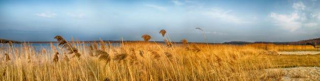 Idyllic Lake with reeds. And blue sky Stock Photos