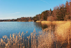 Idyllic lake shore seehamer see in autumn Stock Photography