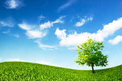 Idyllic landscape Stock Photography