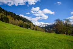 Idyllic landscape in the Alps with fresh green meadows and blooming flowers and snowcapped mountain tops in the Royalty Free Stock Photography
