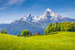 Idyllic landscape in the Alps with fresh green meadows in spring stock photos