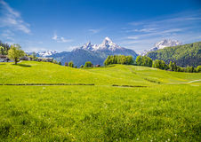 Idyllic landscape in the Alps with green meadows and farmhouse. Idyllic landscape in the Alps with fresh green meadows and blooming flowers and snowcapped Royalty Free Stock Photos