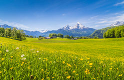 Idyllic landscape in the Alps with green meadows and flowers Royalty Free Stock Image