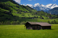 Idyllic landscape in the Alps in springtime with traditional mountain chalet and fresh green mountain pastures with flowers. Stock Photography