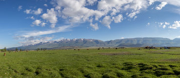 The idyllic landscape: cow grazing and tourists pack their tent Stock Photo