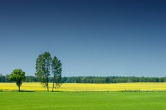 Idyllic landscape, lonely tree among green fields. Blue sky in the background stock photos