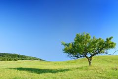 Idyllic landscape, lonely tree among green fields. Blue sky in the background royalty free stock photography