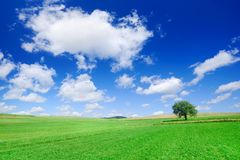 Idyllic landscape, lonely tree among green fields. Blue sky and white clouds in the background stock photography
