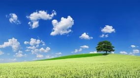 Idyllic landscape, lonely tree among green fields. Blue sky and white clouds in the background stock image