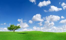Idyllic landscape, lonely tree among green fields. Blue sky and white clouds in the background stock images
