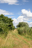 Idyllic landscape of meadow path and bushes around Stock Images