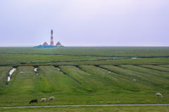 Idyllic Landscape of North Sea region with lighthouse and sheeps Royalty Free Stock Photography
