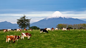 Idyllic landscape of Osorno Volcano in Chile. Idyllic landscape of Osorno Volcano, Lake Region, Chile Royalty Free Stock Photos
