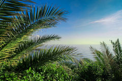 Idyllic landscape with palm trees and sea. Royalty Free Stock Photos